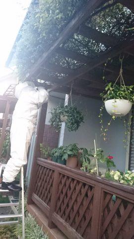 小倉南区でのハチ駆除作業写真 その1